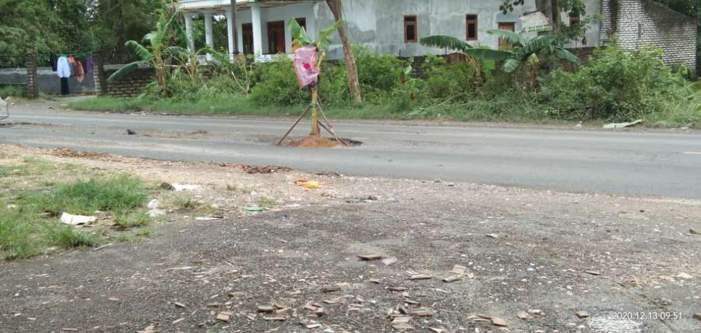 jalan raya ditanami pohon pisang