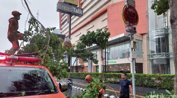 Hujan dan Angin Landa Kediri, Pohon Bertumbang