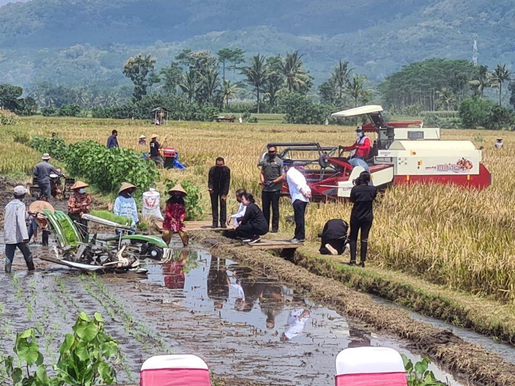 Ikut Panen Raya di Malang, Puan: Pertanian adalah Urusan Hidup Matinya Sebuah Bangsa